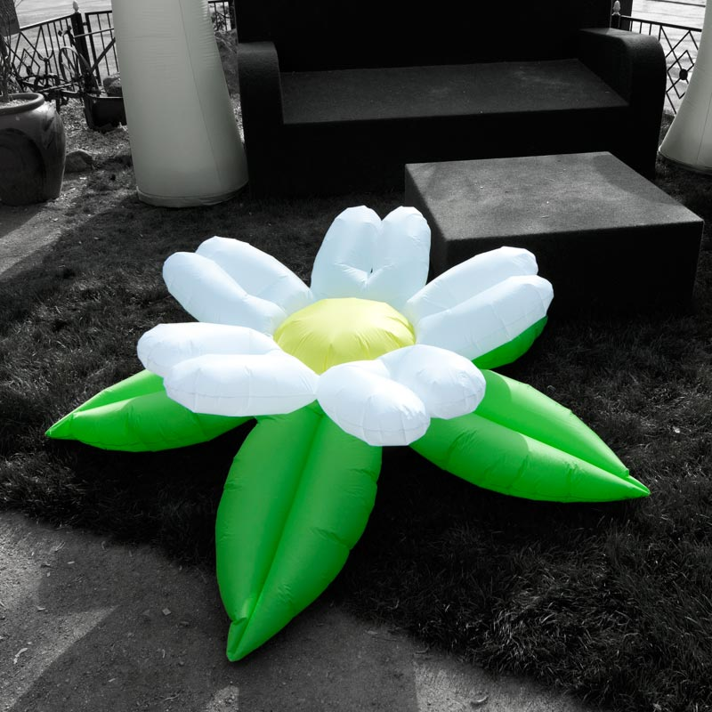 MINI FLOWER With Five Different Bloomshapes